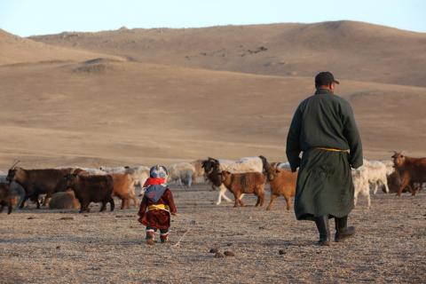 IOM, Mongolia Build Displacement Tracking Capacity to Prepare for Natural Disasters